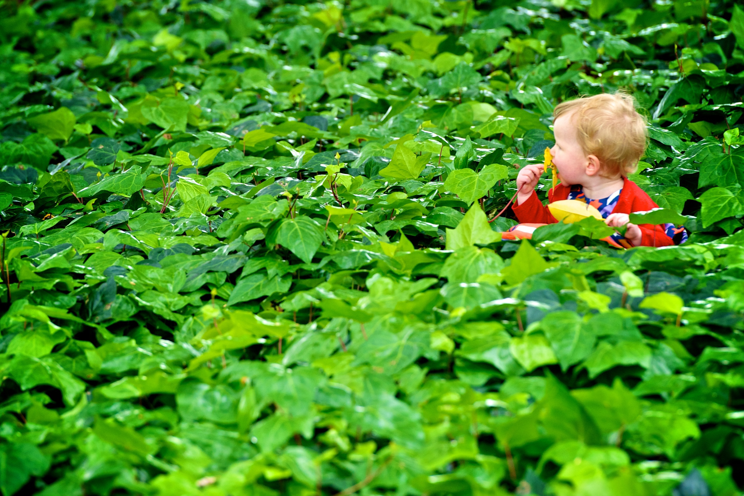 A great photograph of a little girl in Hyde Park during a family photography shoot