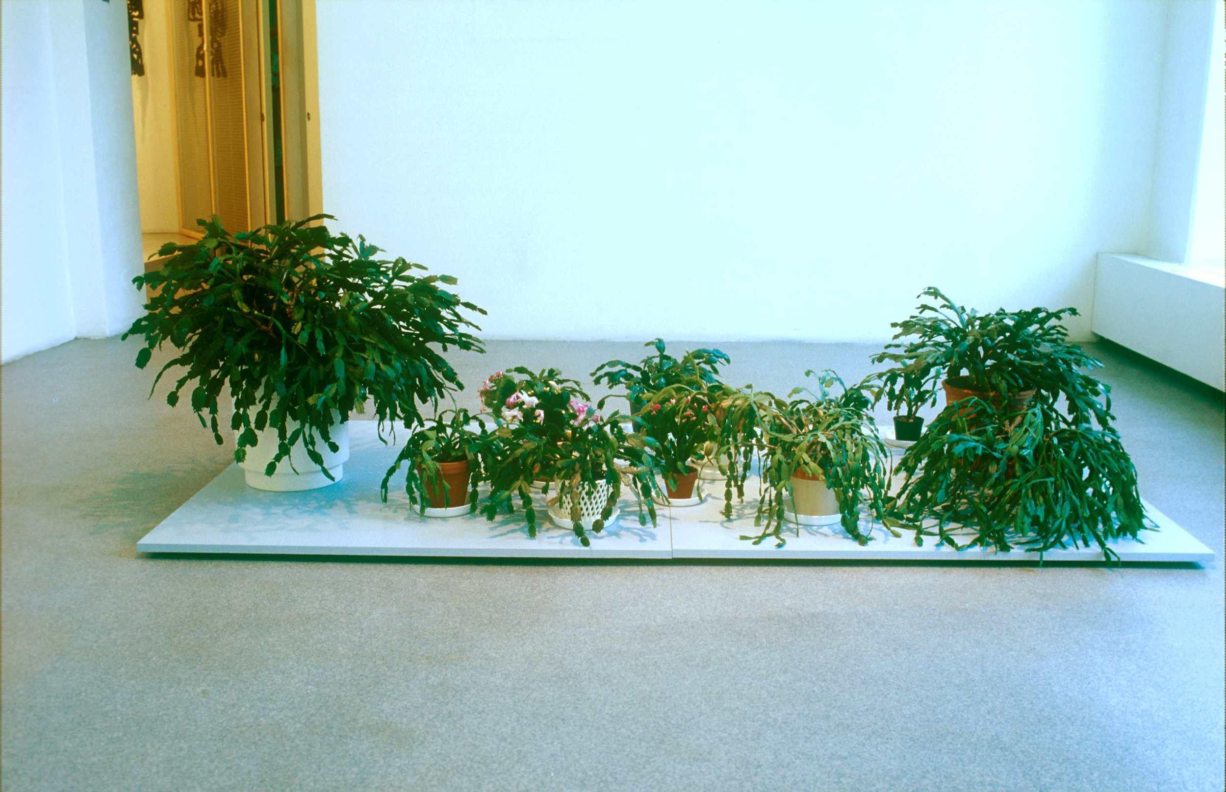 Meeting of Christmas Cactus, 2002