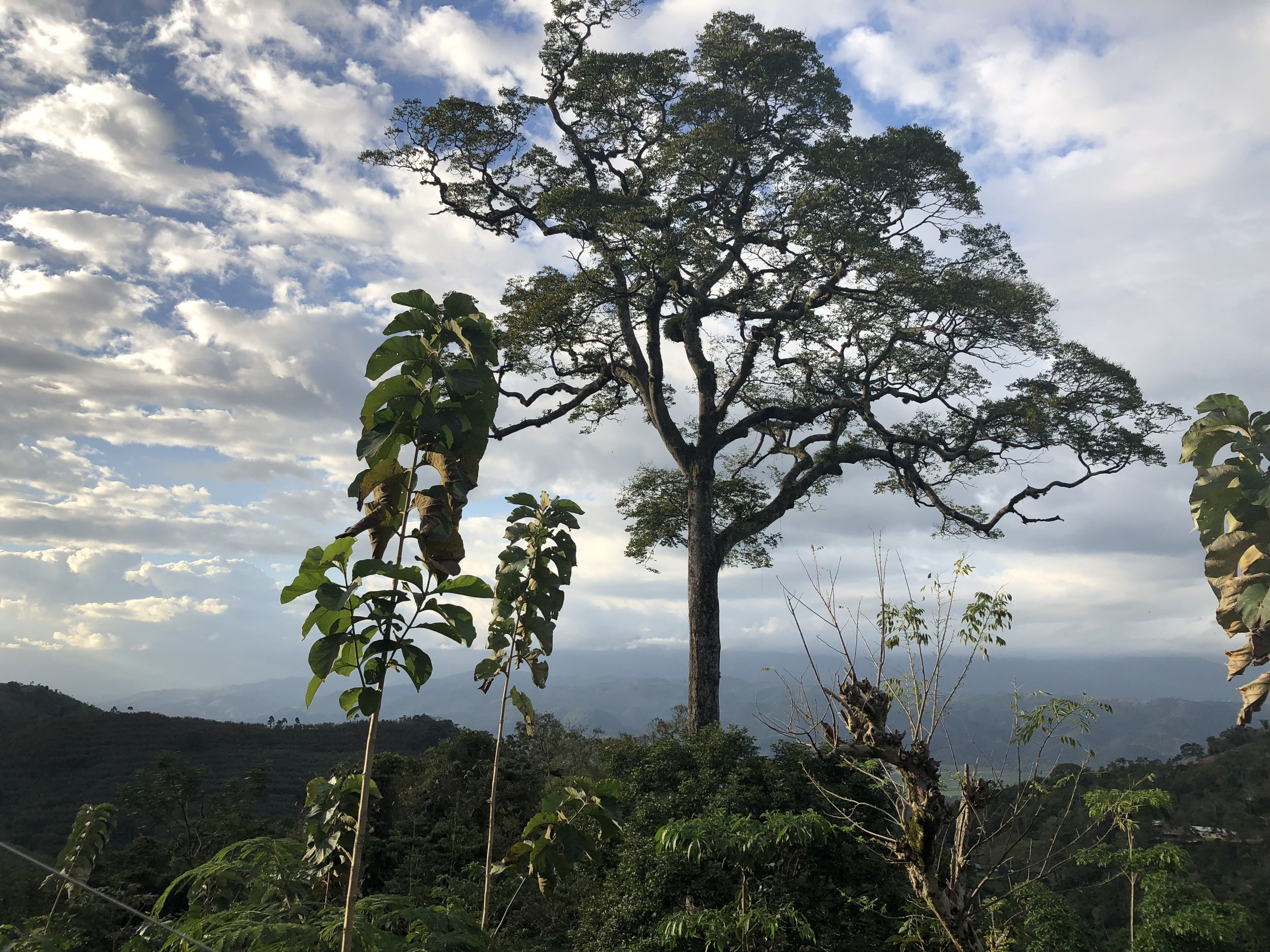 Hearts around the world... - Read first hand how One World has brought DaliLeo Cacao to folks from all over with all one common love: Cacao! See how the changes, expansions, health benefits and overall growth, progress and experiences have shaped the One World family.