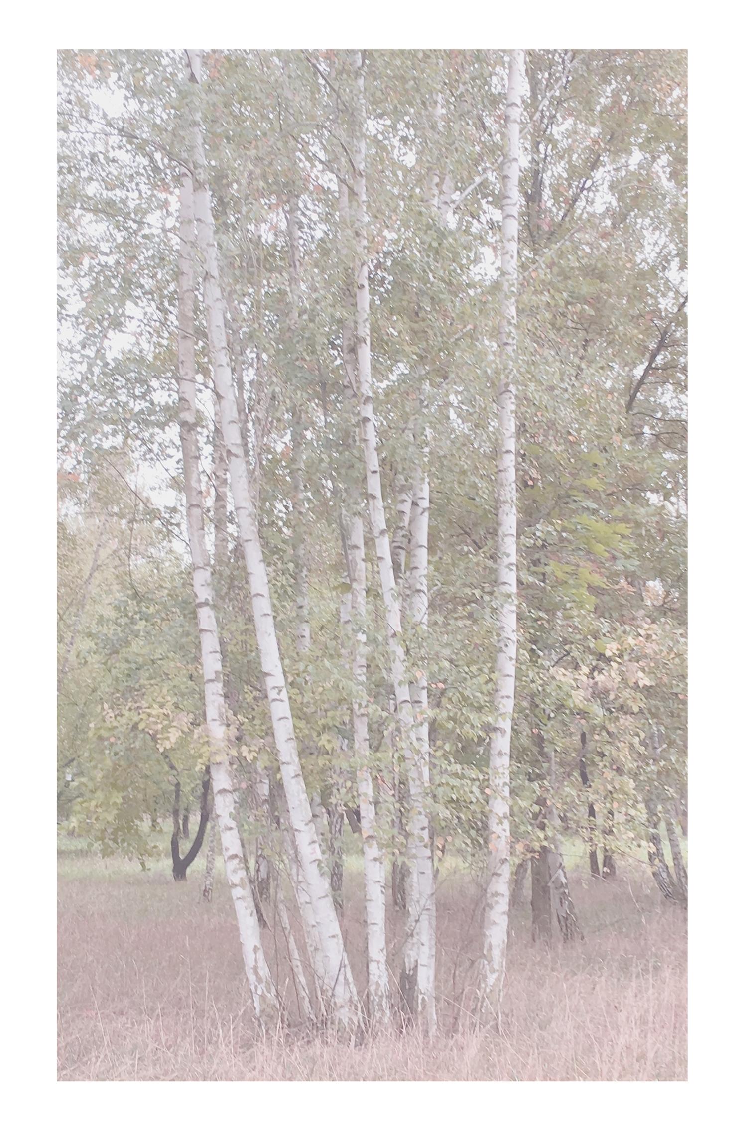 treefinal2web.jpg