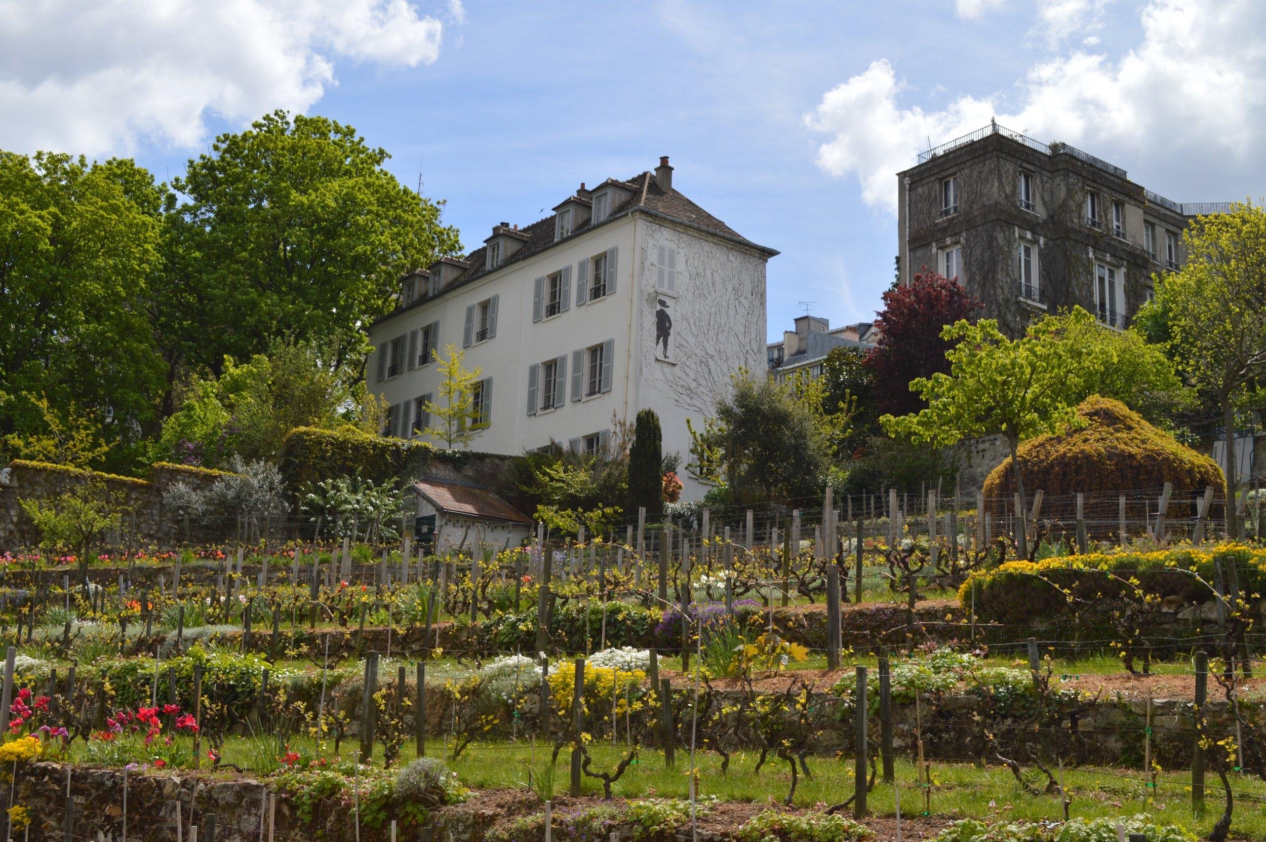 Montmartre Vineyard in Paris