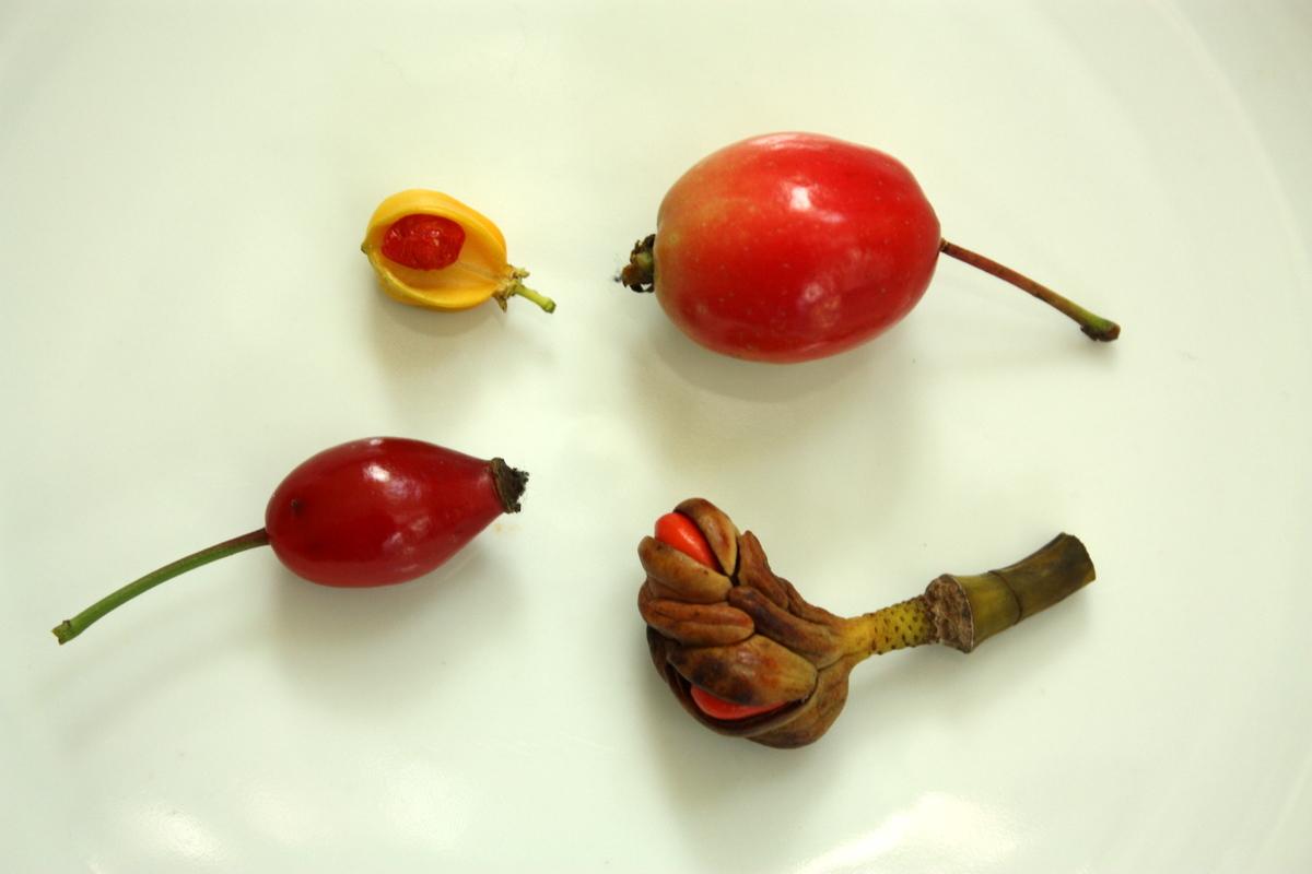 Arthur Lee Jacobson Fruit, Nut, and Seed ID Walk