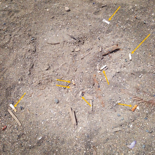 The eight cigarette butts featured in my tale, indicated by yellow arrows.