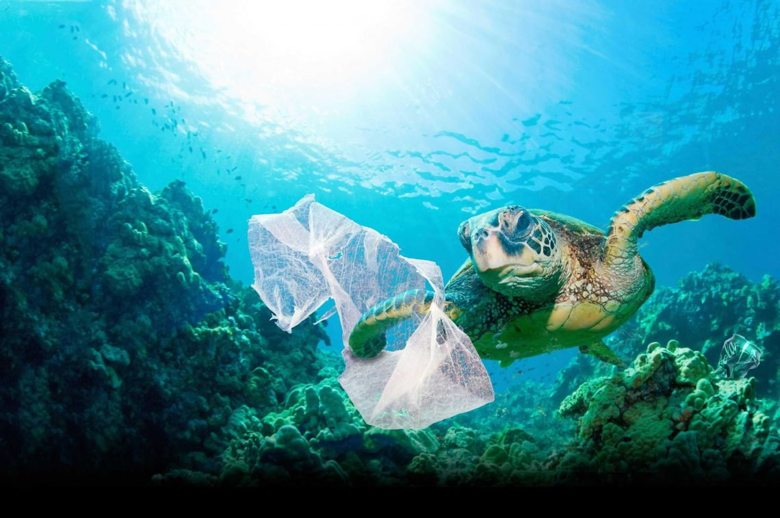 Why Is Plastic In The Ocean So Bad? -