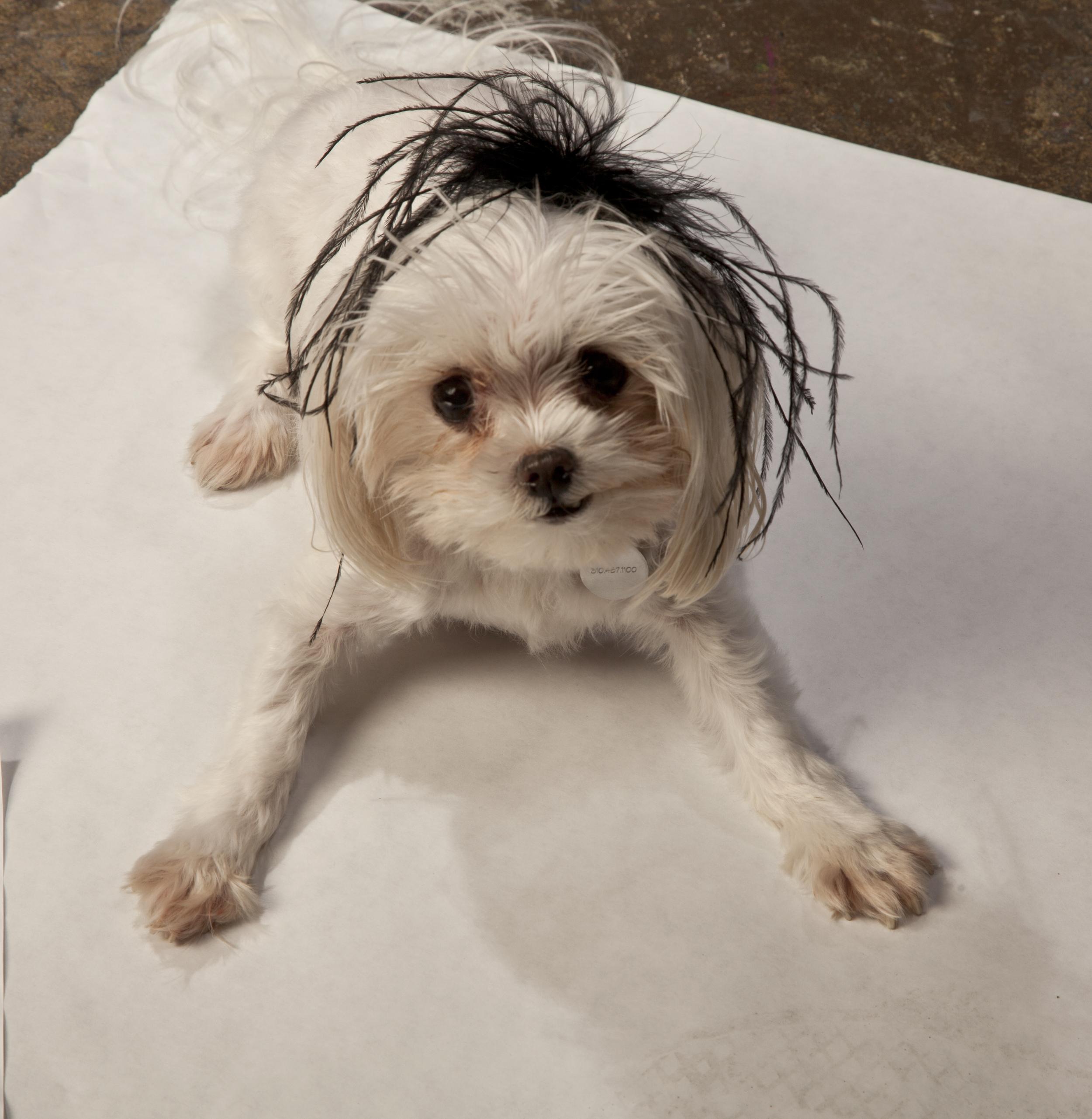 doggie in feathersIMG_4240.jpg