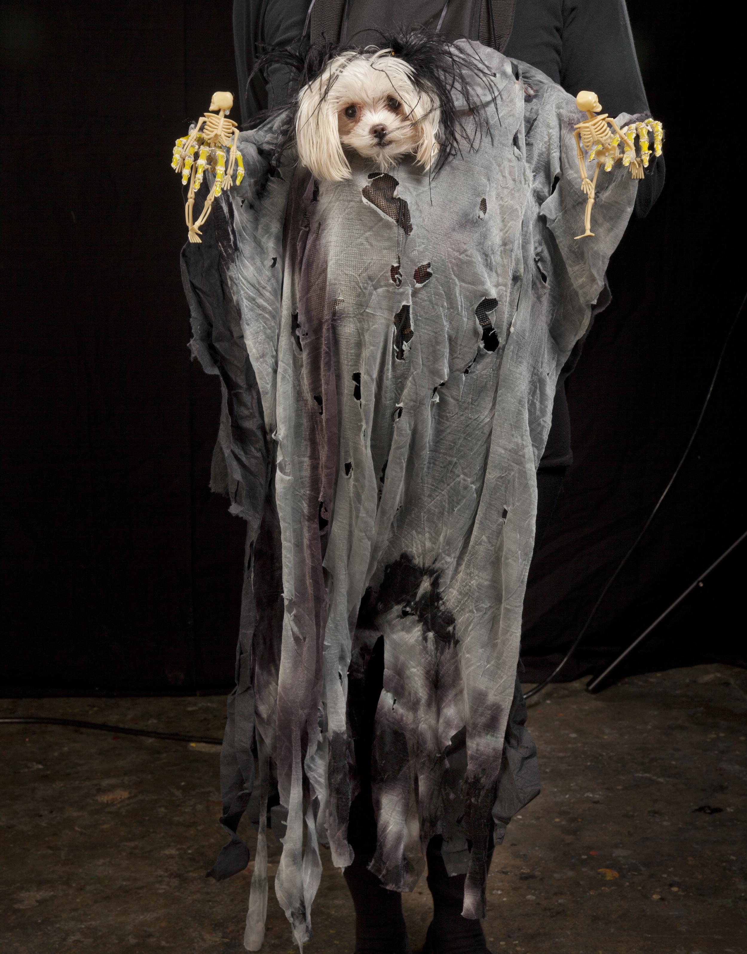 dog, skeleton pawsIMG_4238.jpg