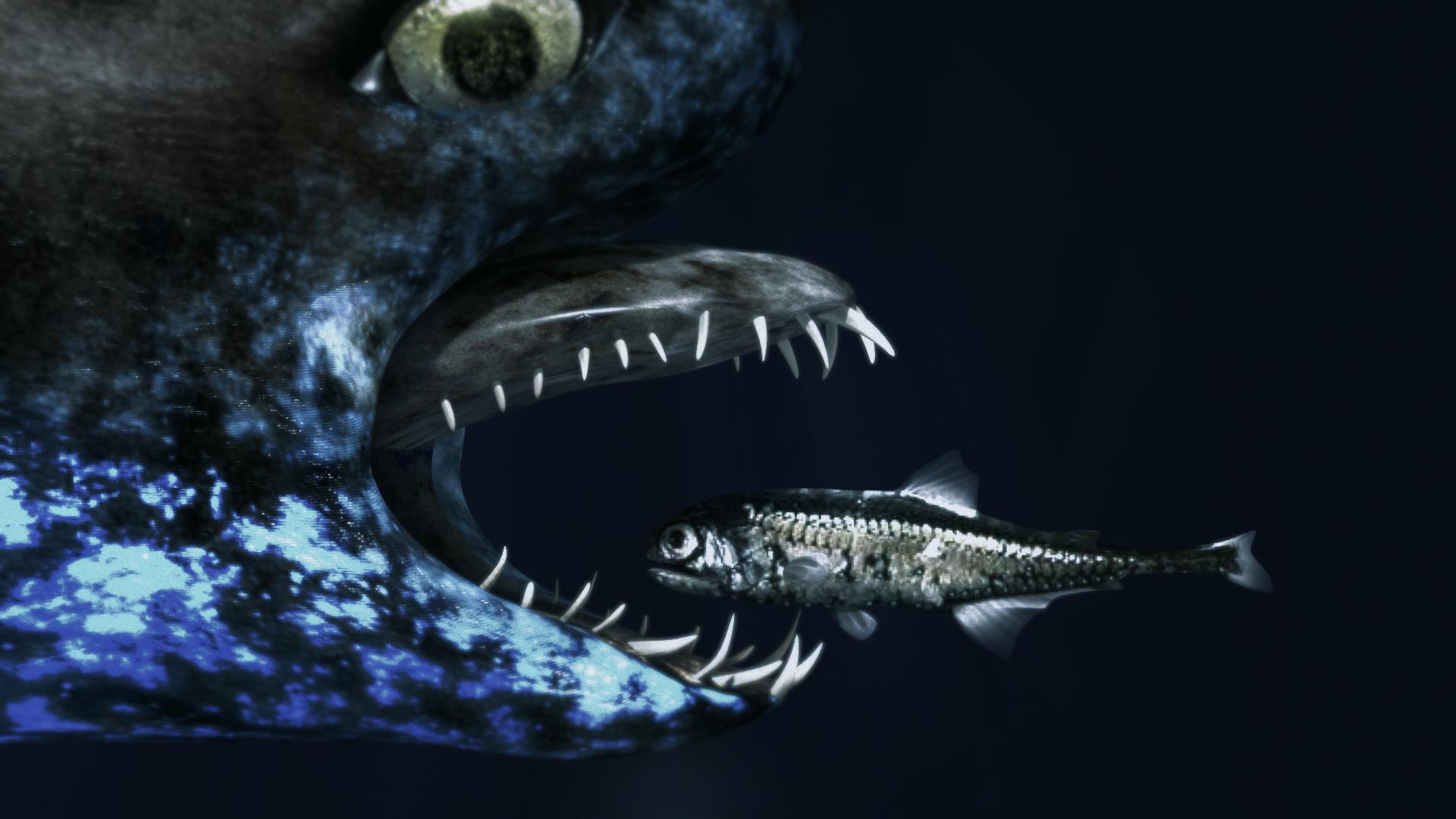 Shark4.png