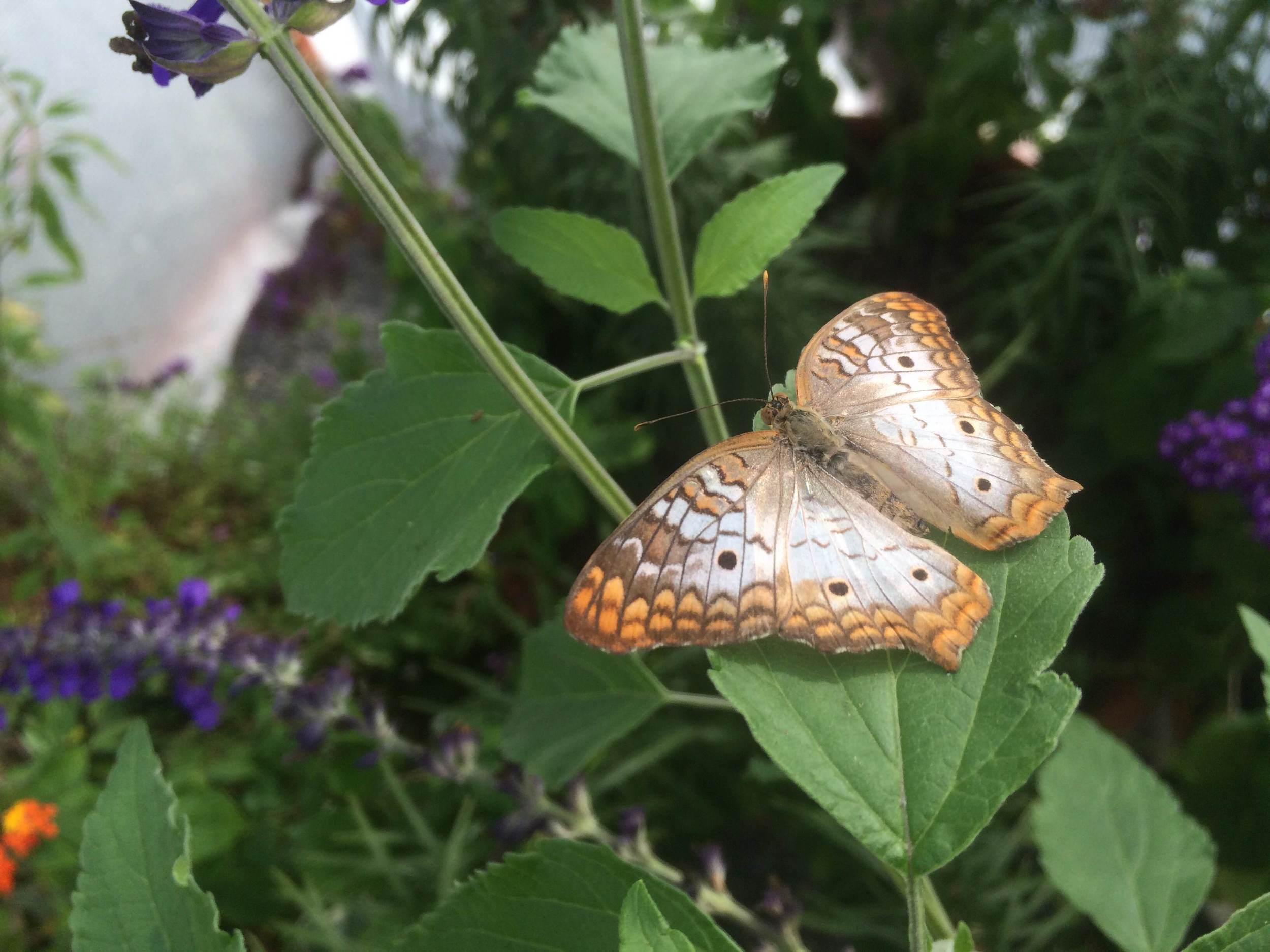 The Butterfly Zoo will remain open only for another few weeks.