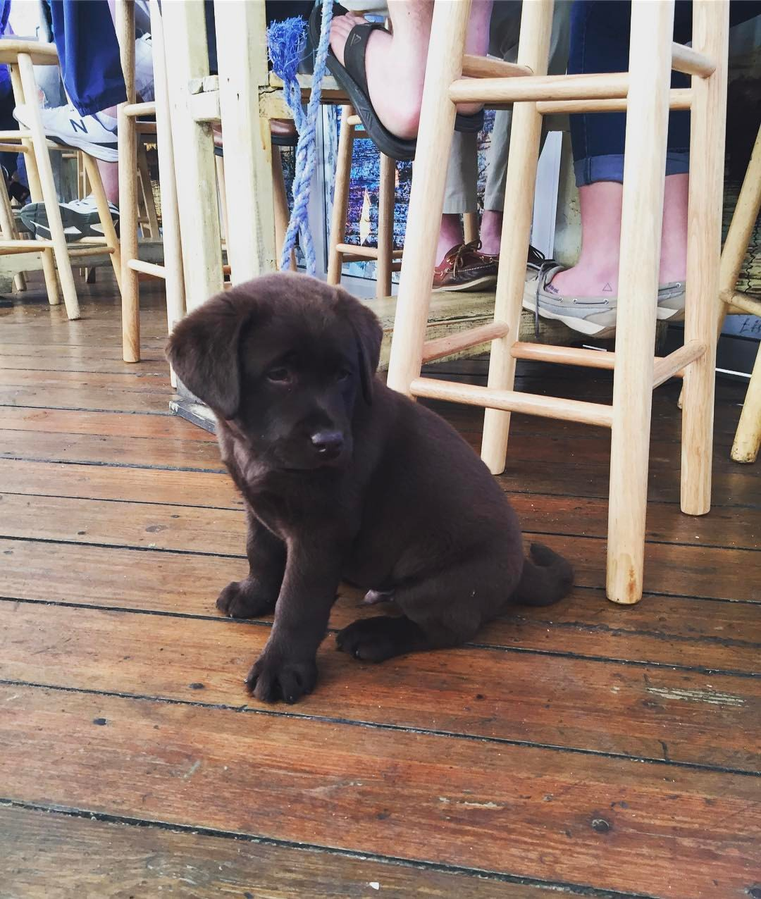 Photo/Facebook/@WhalesTaleNPT  Whales Tale in Northport is a pup-friendly seafood restaurant and bar.