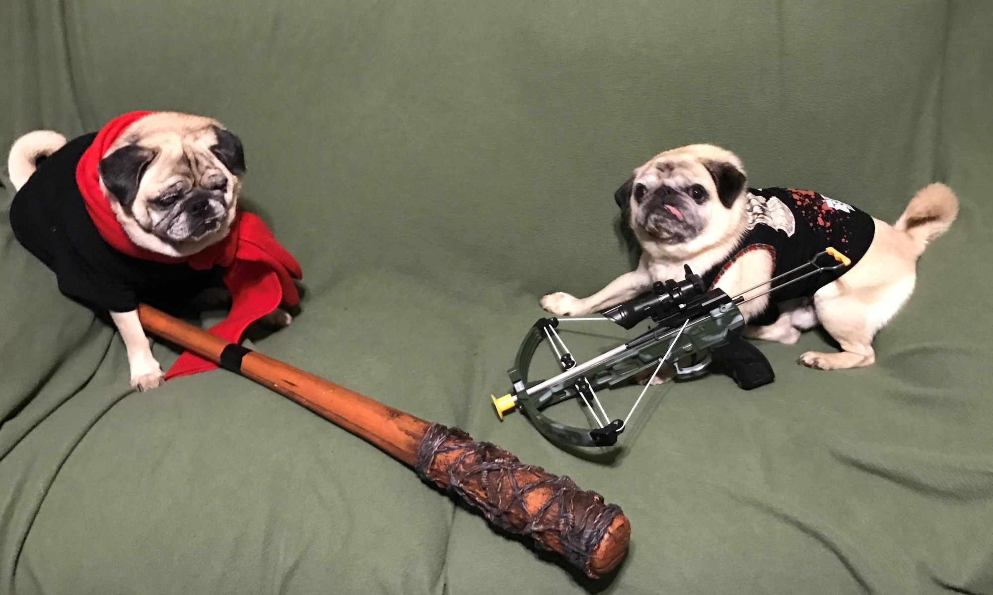 The Walking Dead pugs Owen and Butkus was submitted by Jodi as an  entrant in the Town's Halloween costume photo contest.  Photo Courtesy of Tohcares.com