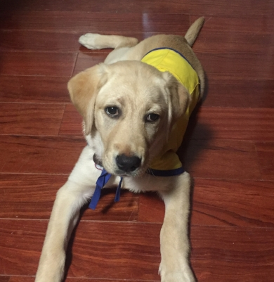 If Orienne is among the dogs in training who succeed, the dog will assist someone with special needs in the future.