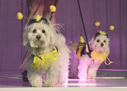 A fashion show fundraiser for Little Shelter had adoptable pooches walking the runway.