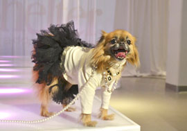 Dogs were dolled up in exclusive pieces from The Official Kane & Couture by Julie Lancaster from Off the Cuff Stuff for Pets