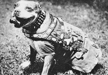 """Sgt. Stubby: An American Hero"" tells the story of how a stray who dog became a war hero during WWI. A screening of the film at Cinema Arts Centre on May 4 will benefit the American Legion posts and America's VetDogs.  Photo/Purple Heart Foundation"
