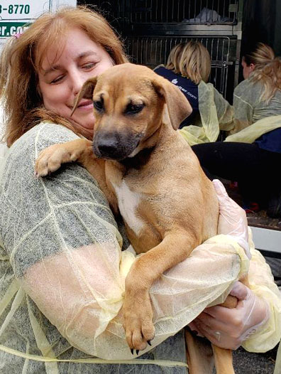A Little Shelter volunteer cradles one of 30 puppies rescued from euthanization in South Texas last month.