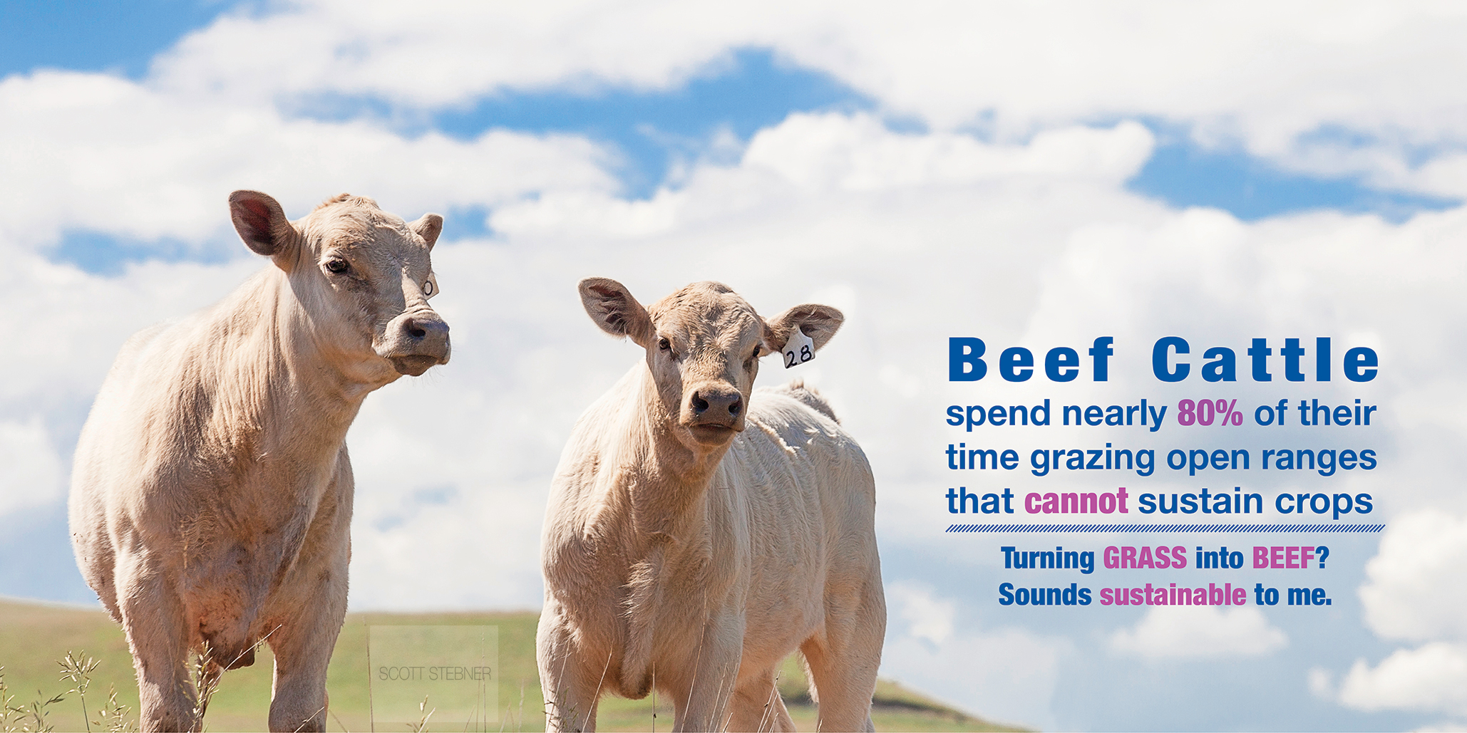 grass fed beef facts