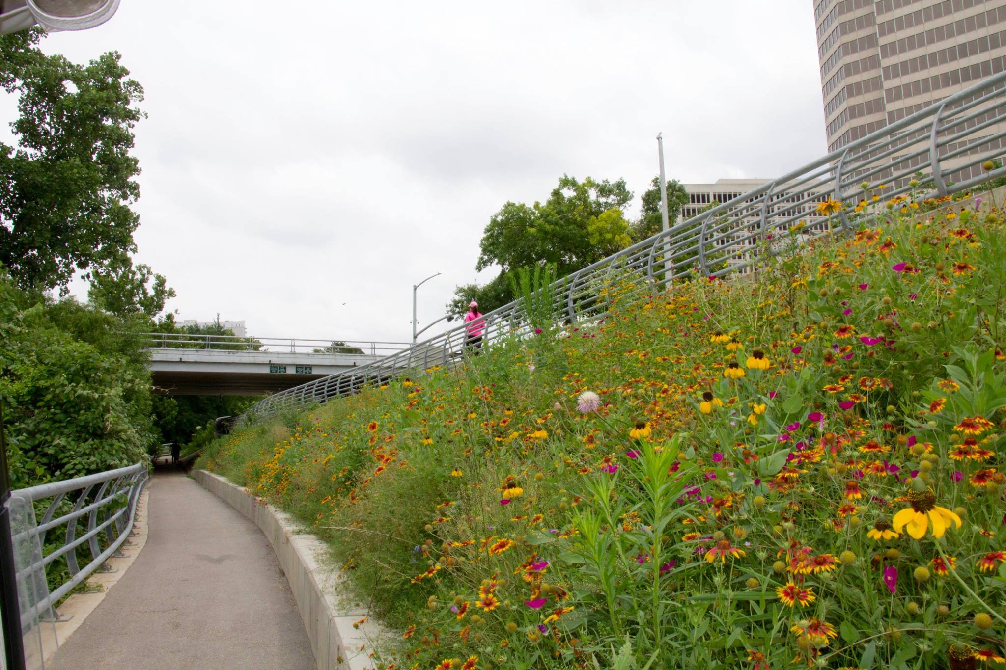 Buffalo Bayou Park Meadows.jpg