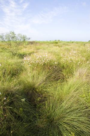 Native Prairie Remnant