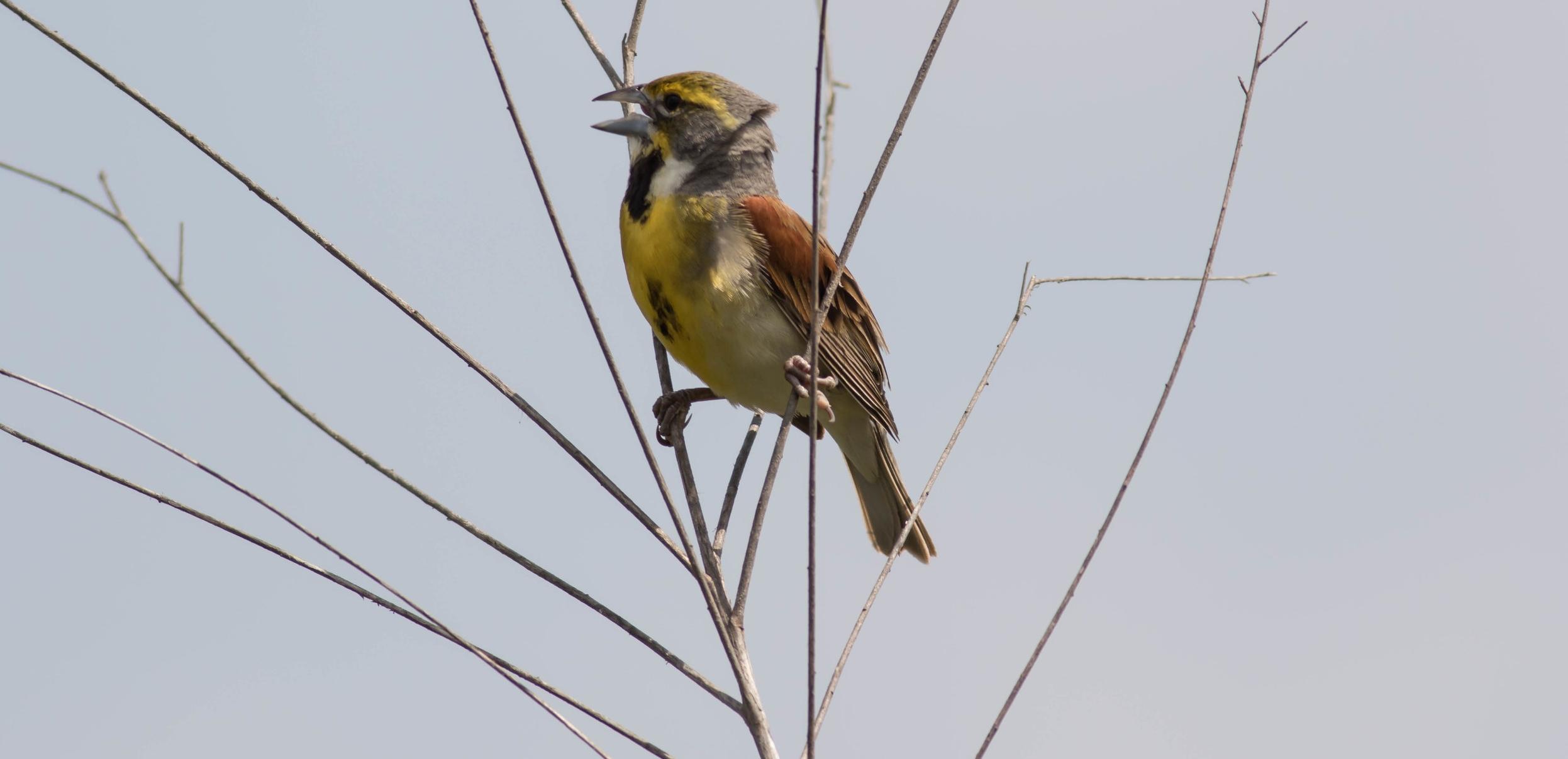 Reintroduction of Species -