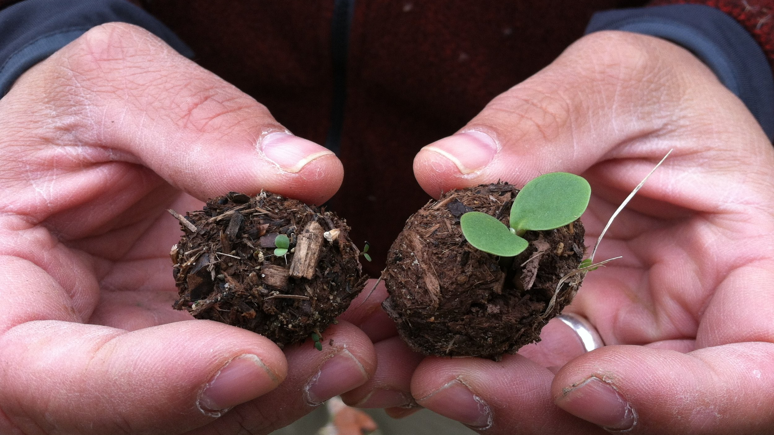 Seed balls can be a quick and engaging part of your planting process.  Photo by Katy Prairie Conservancy.
