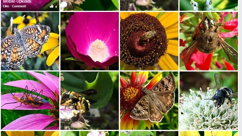 Some native plant enthusiasts keep Facebook or other social galleries to spotlight their plants. Visit the St. Julian's Crossing Facebook page for a good example.  Photos by Lauren Simpson .
