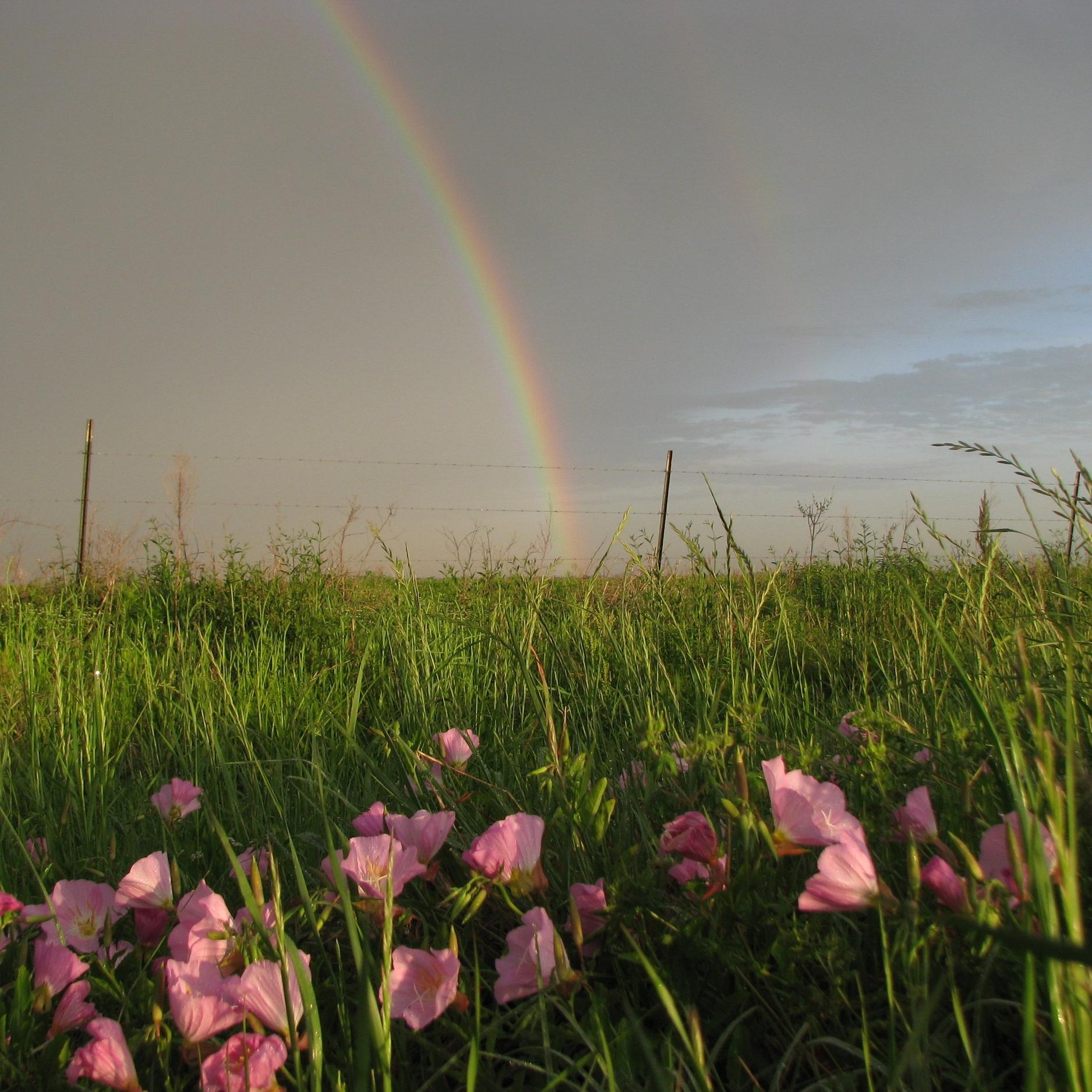 teach about coastal prairies -