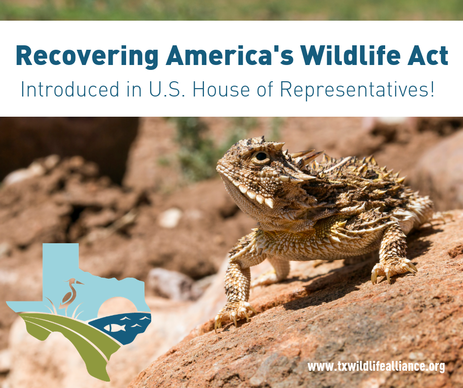 RECOVERING AMERICA'S WILDLIFE ACT -
