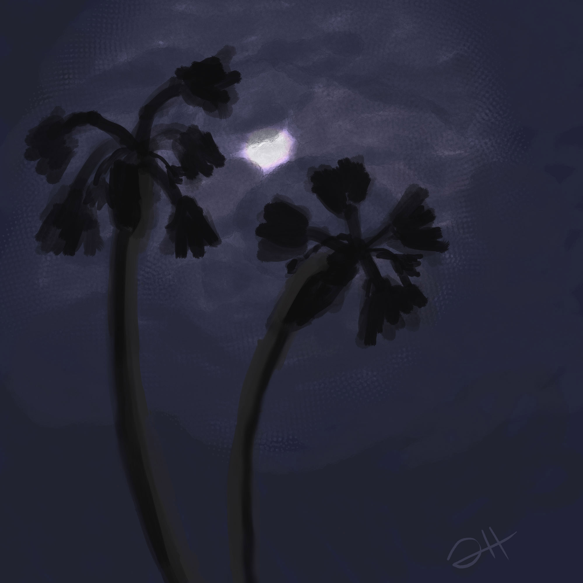 NightCloud.jpg