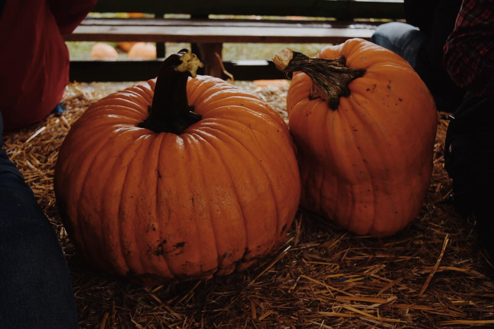 Pumpkin Patch | Hay Ride | Pumpkin Spice Latte Waffles