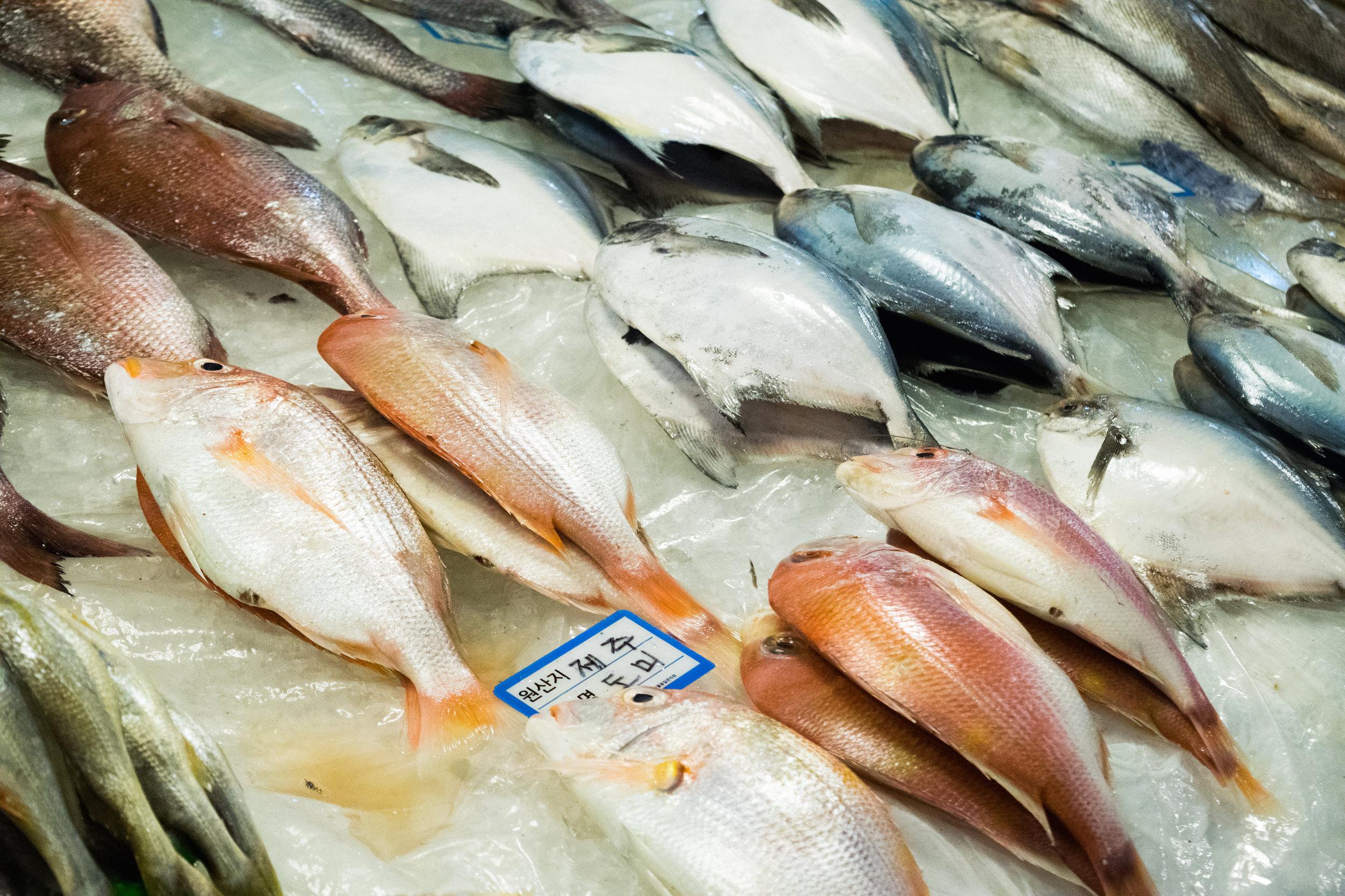 Seoul | Fish Market