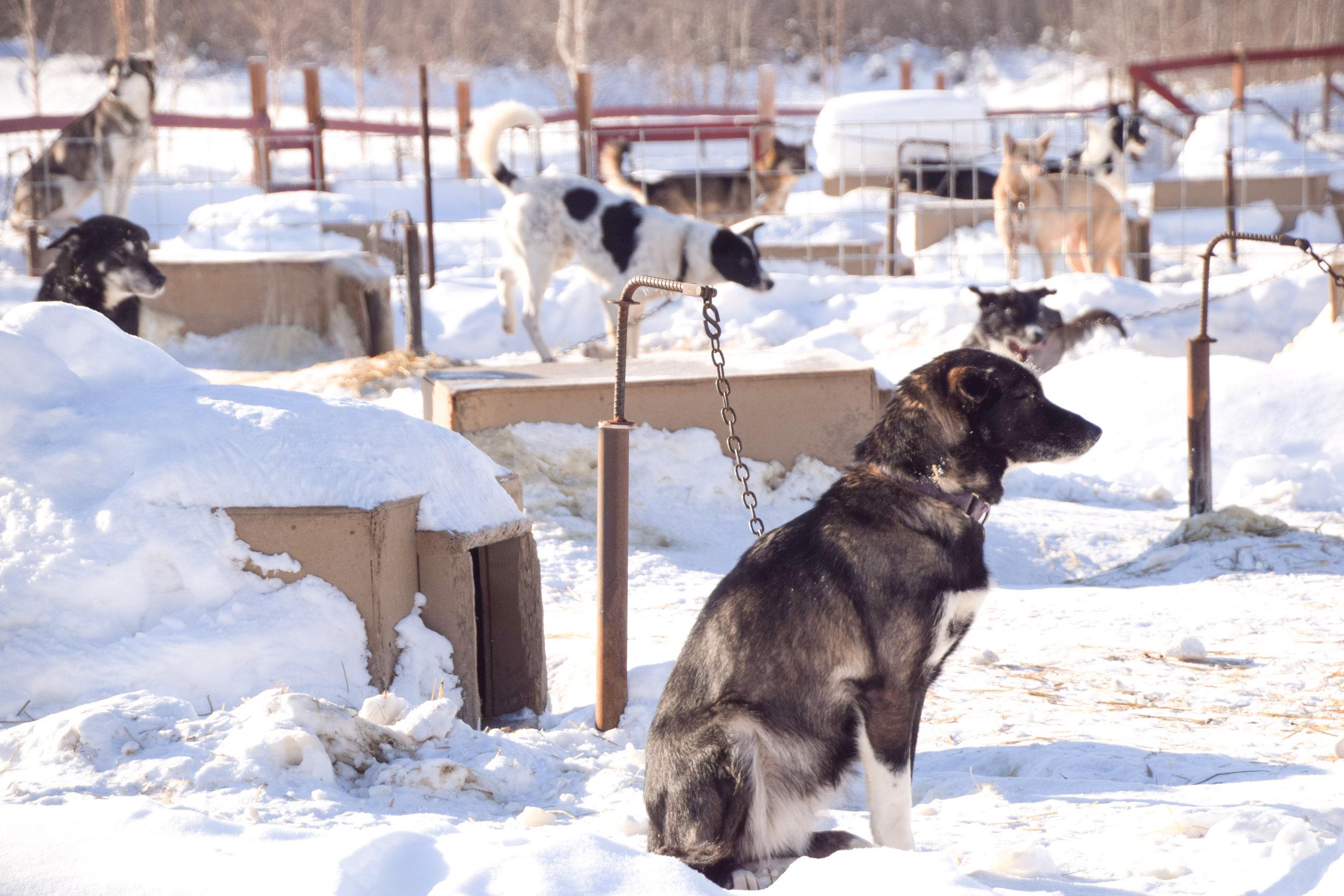 Trail Breaker Kennel