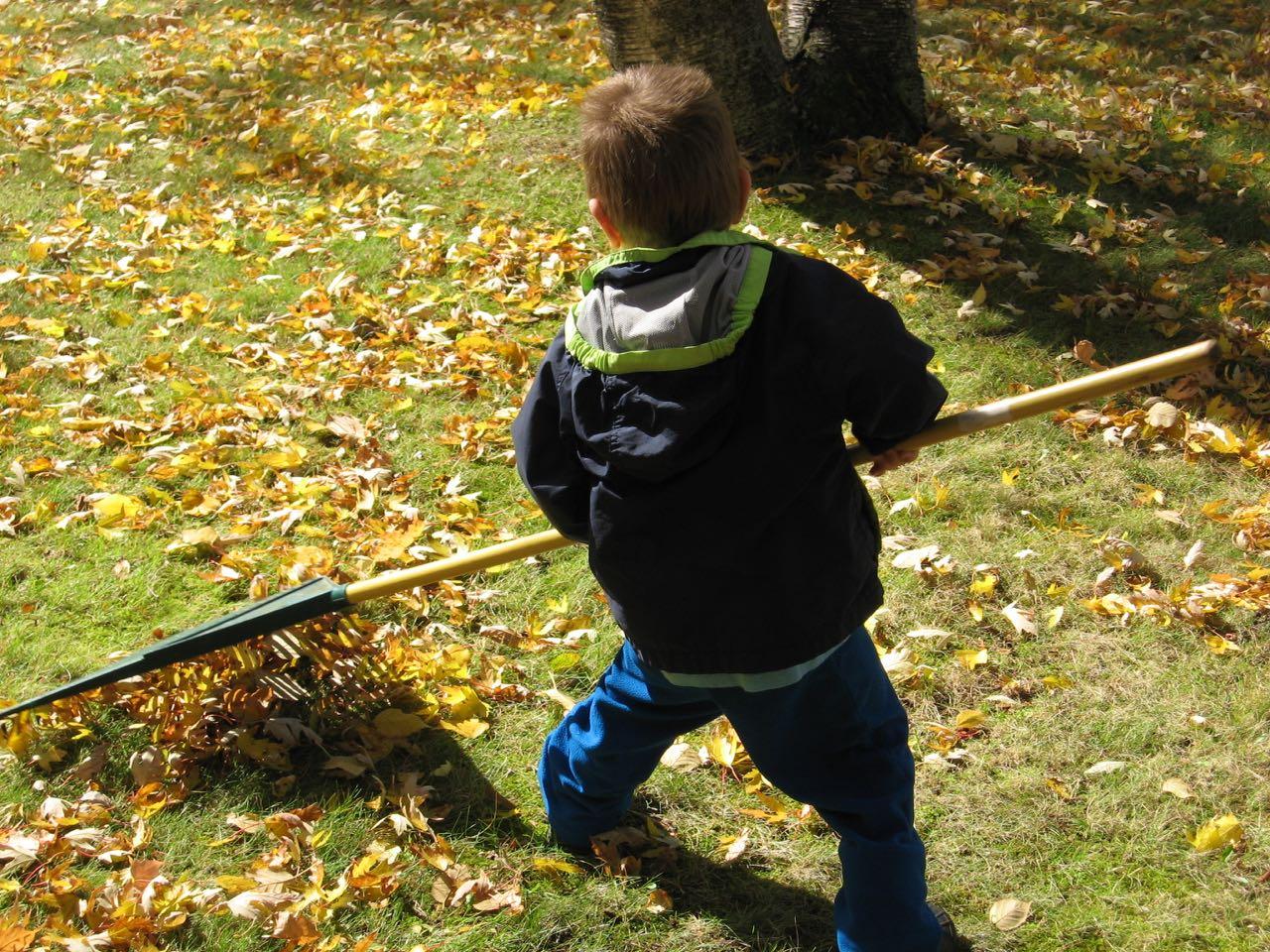 Fisher rakes
