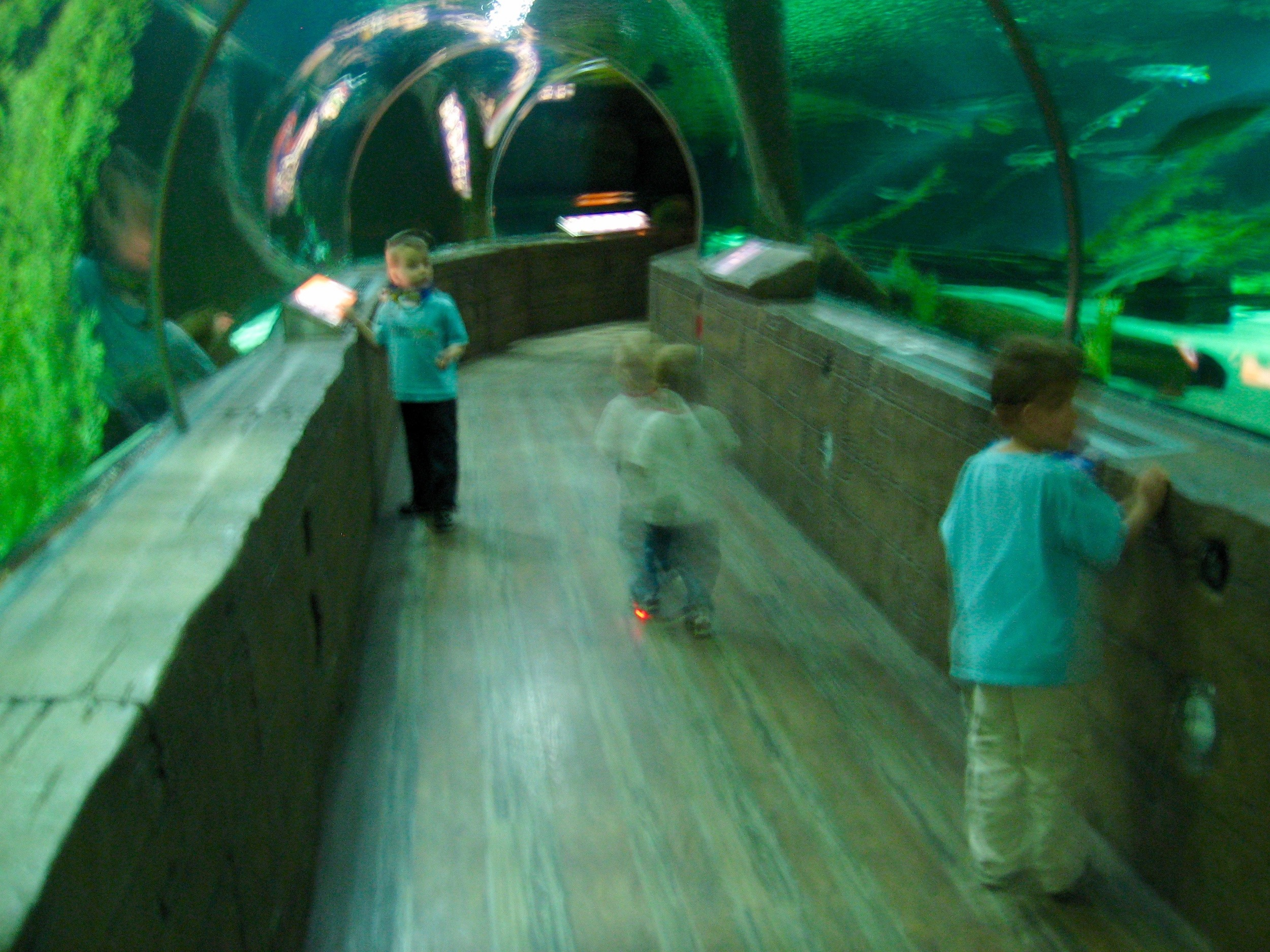 Tunnel of Sea Life