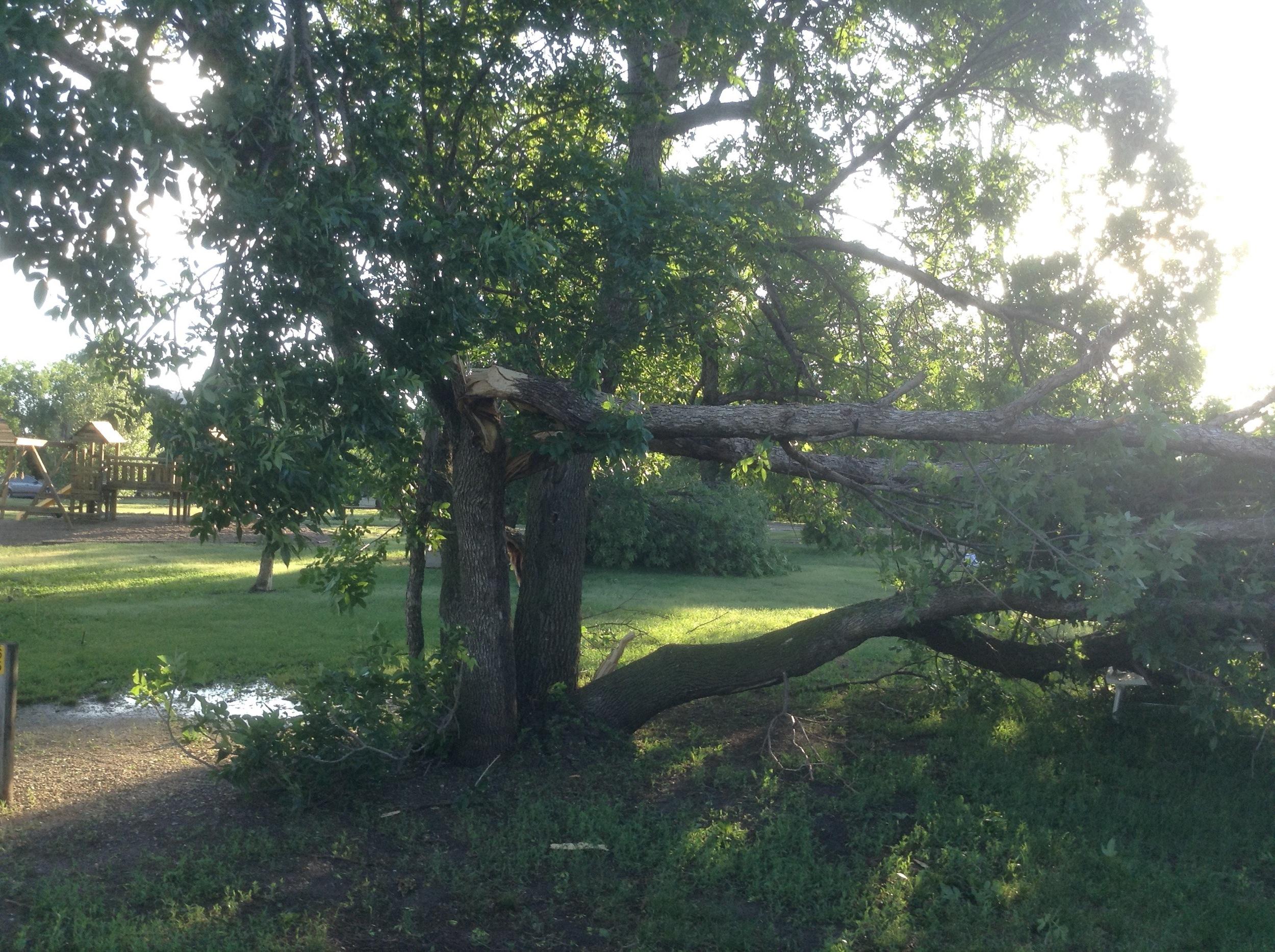 Tree Topple