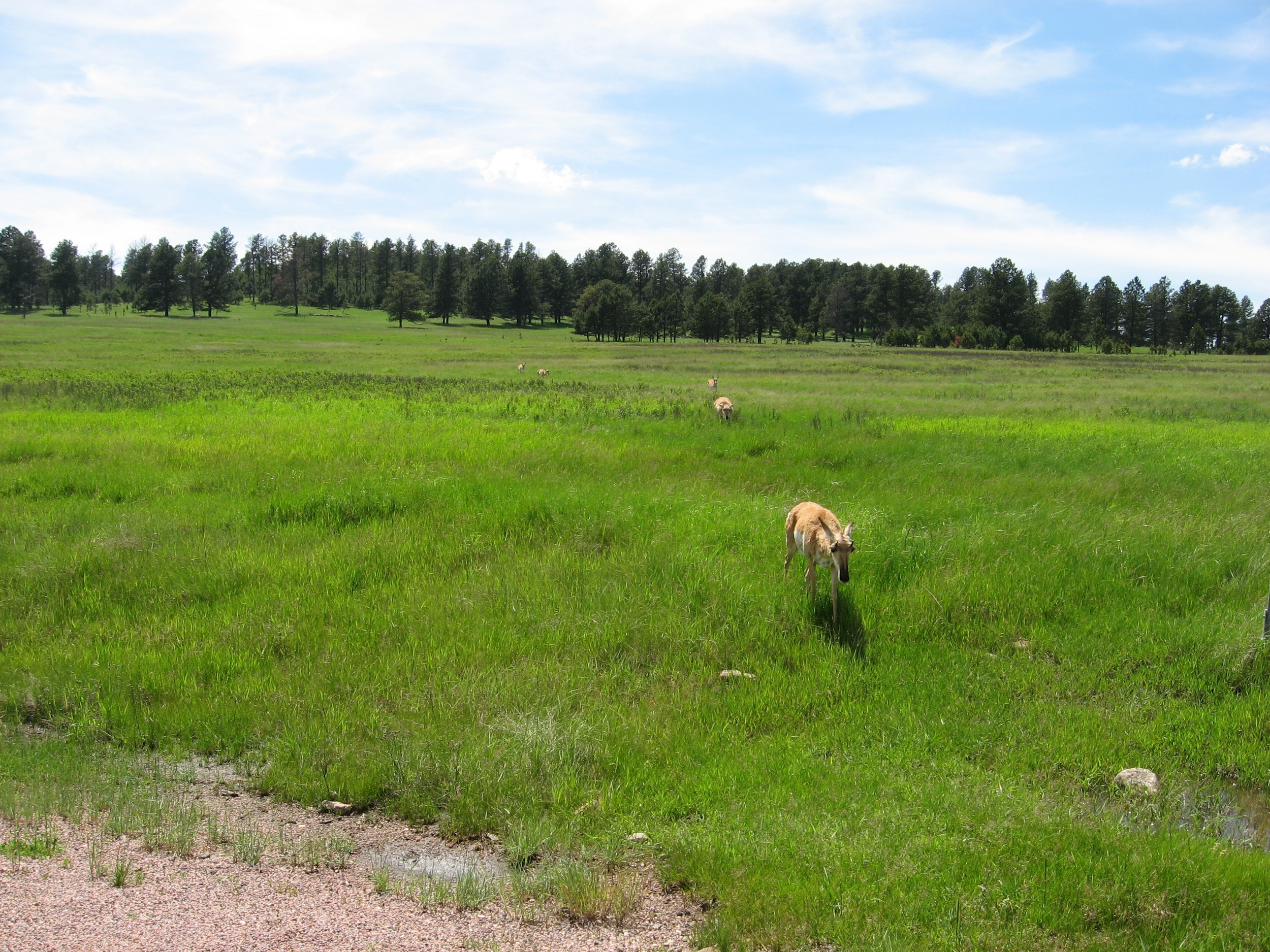 Entering Custer State Park