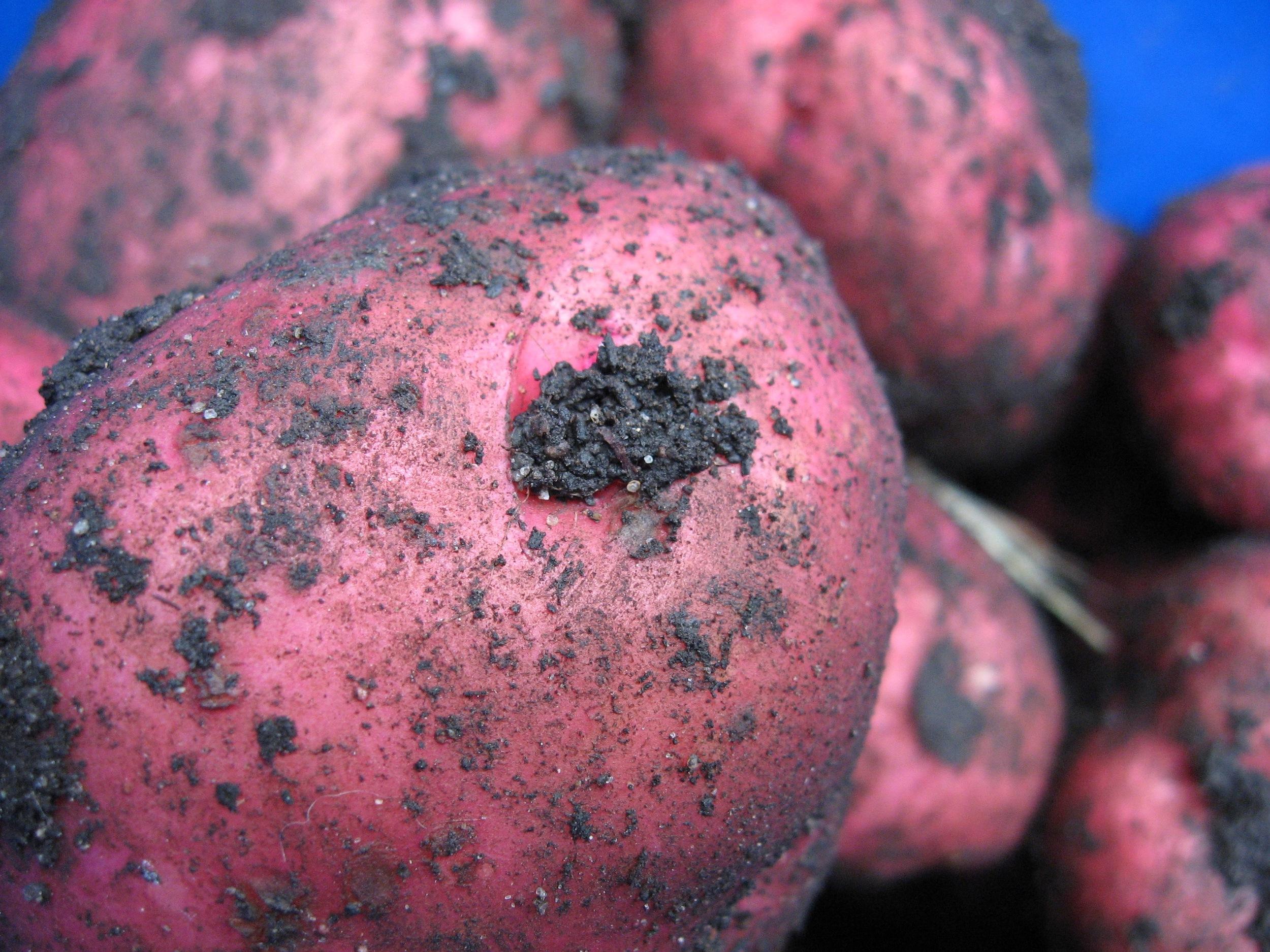 Cute potatoes!