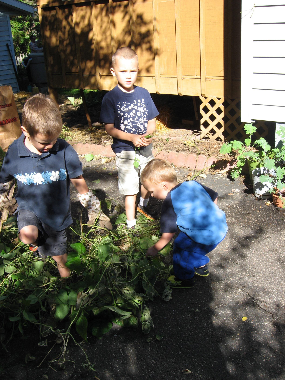 Deconstructing the garden