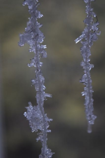 Growing Salt Crystals