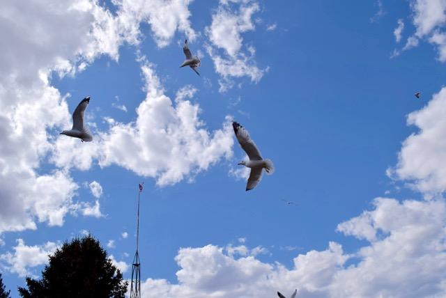 ...seagulls!
