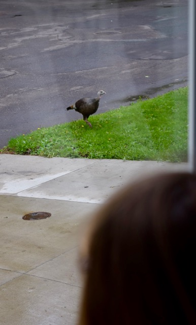 Why did the turkey cross the road?!