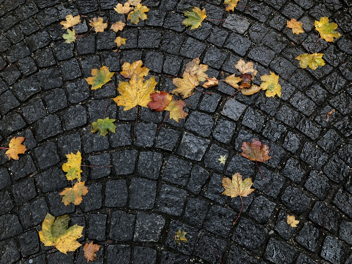 Leaves on wet cobbled ground shot with smartphone