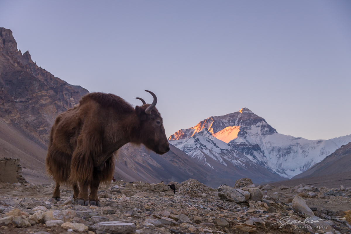 2019-05-17_Tibet503.jpg