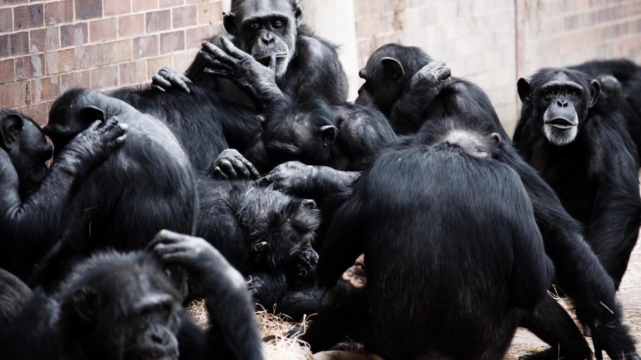group-of-monkeys-871298299027wAP.jpg