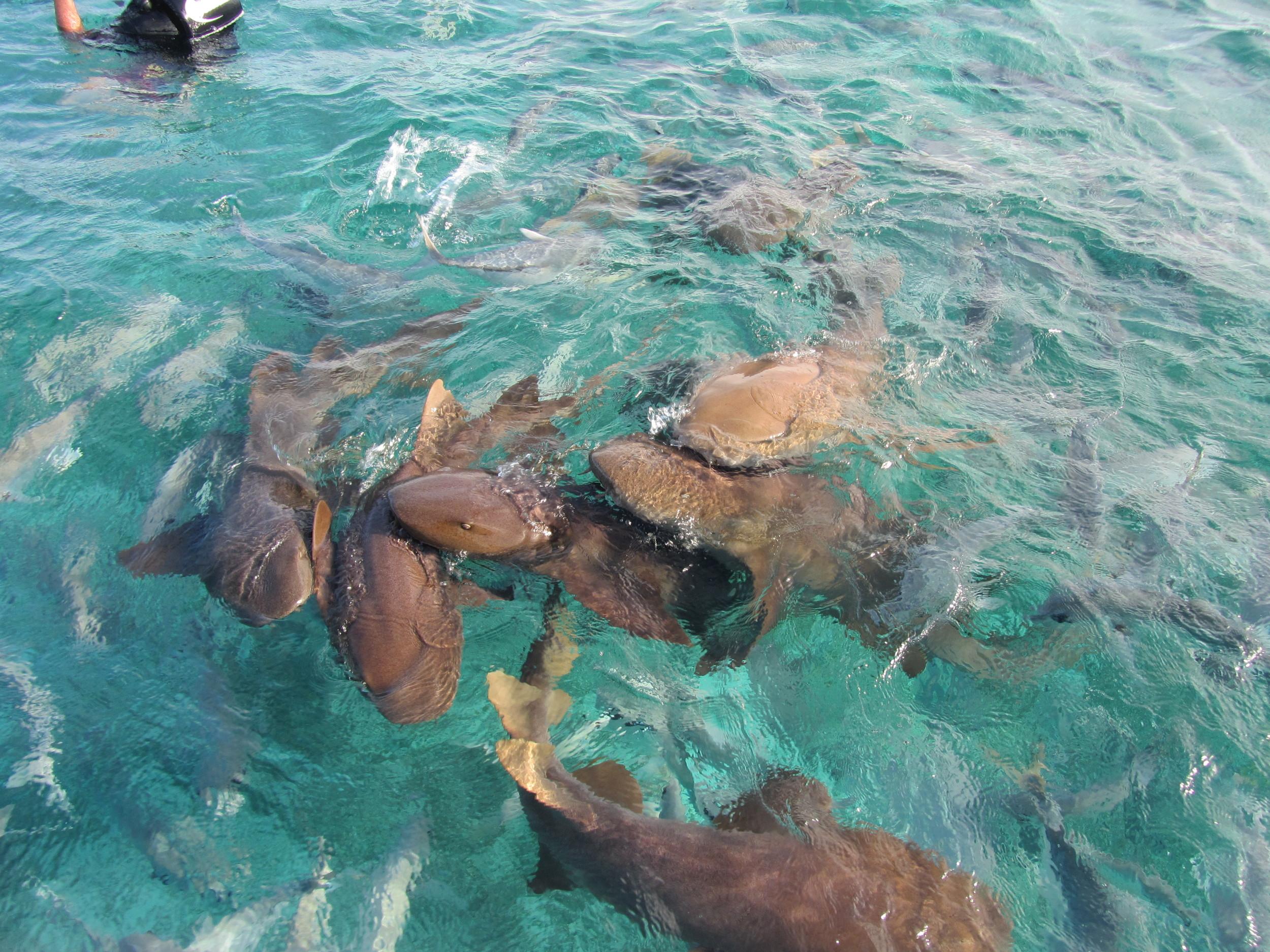 Shark-Ray Alley