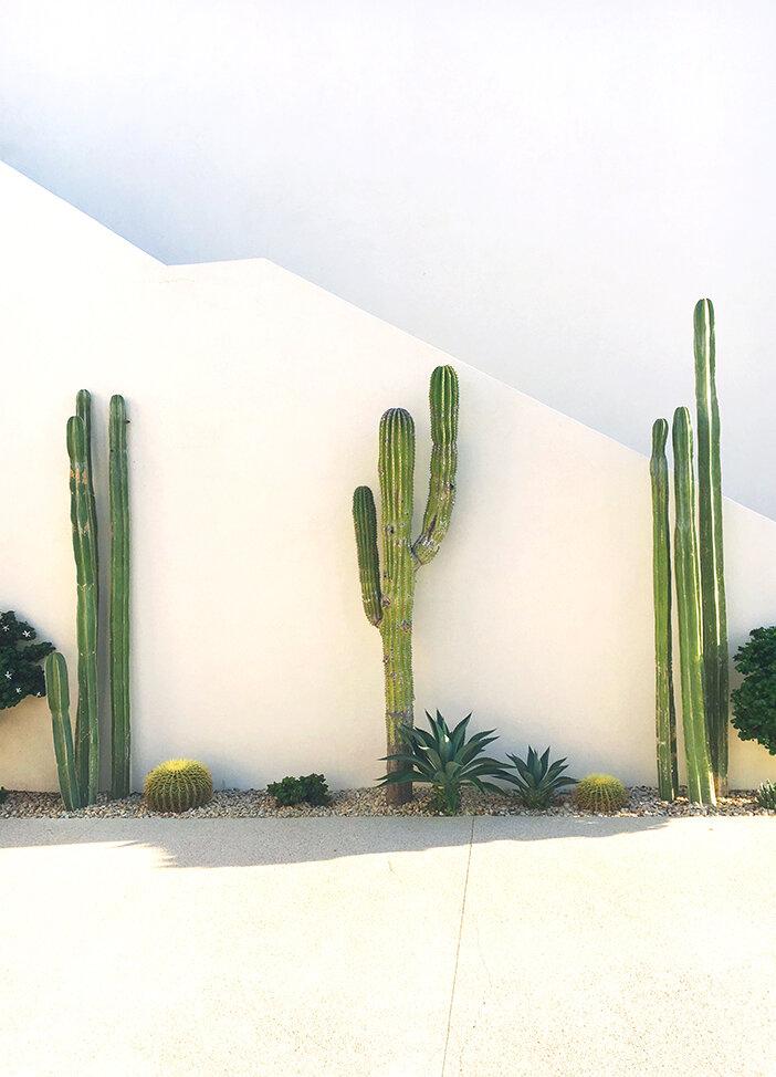 Big_cacti.jpg