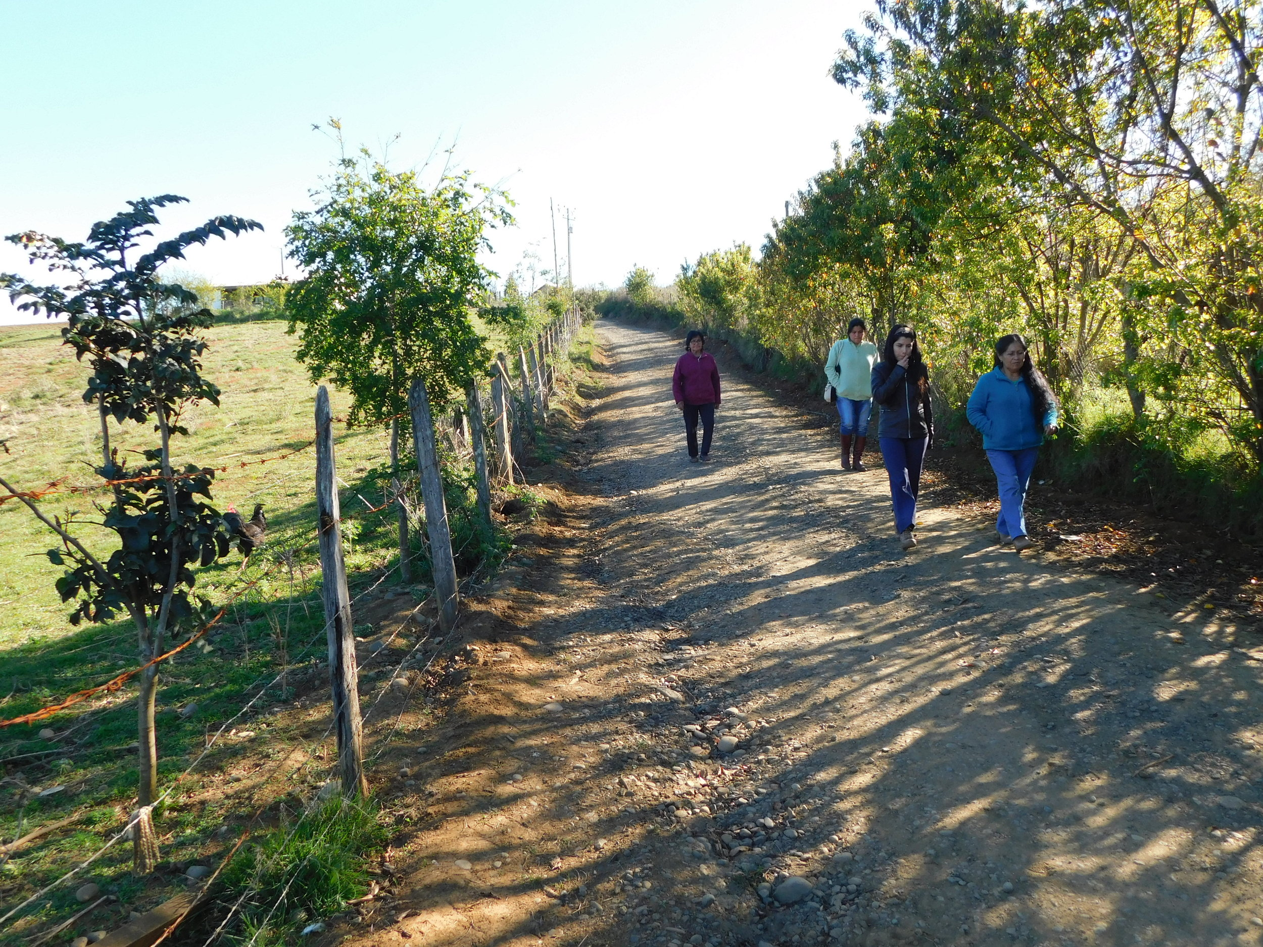 Our team taking a walk in the Allipen Community: Tree lines created to recover environmental assets can be observed.