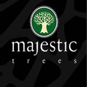 Majestic+Trees.jpg