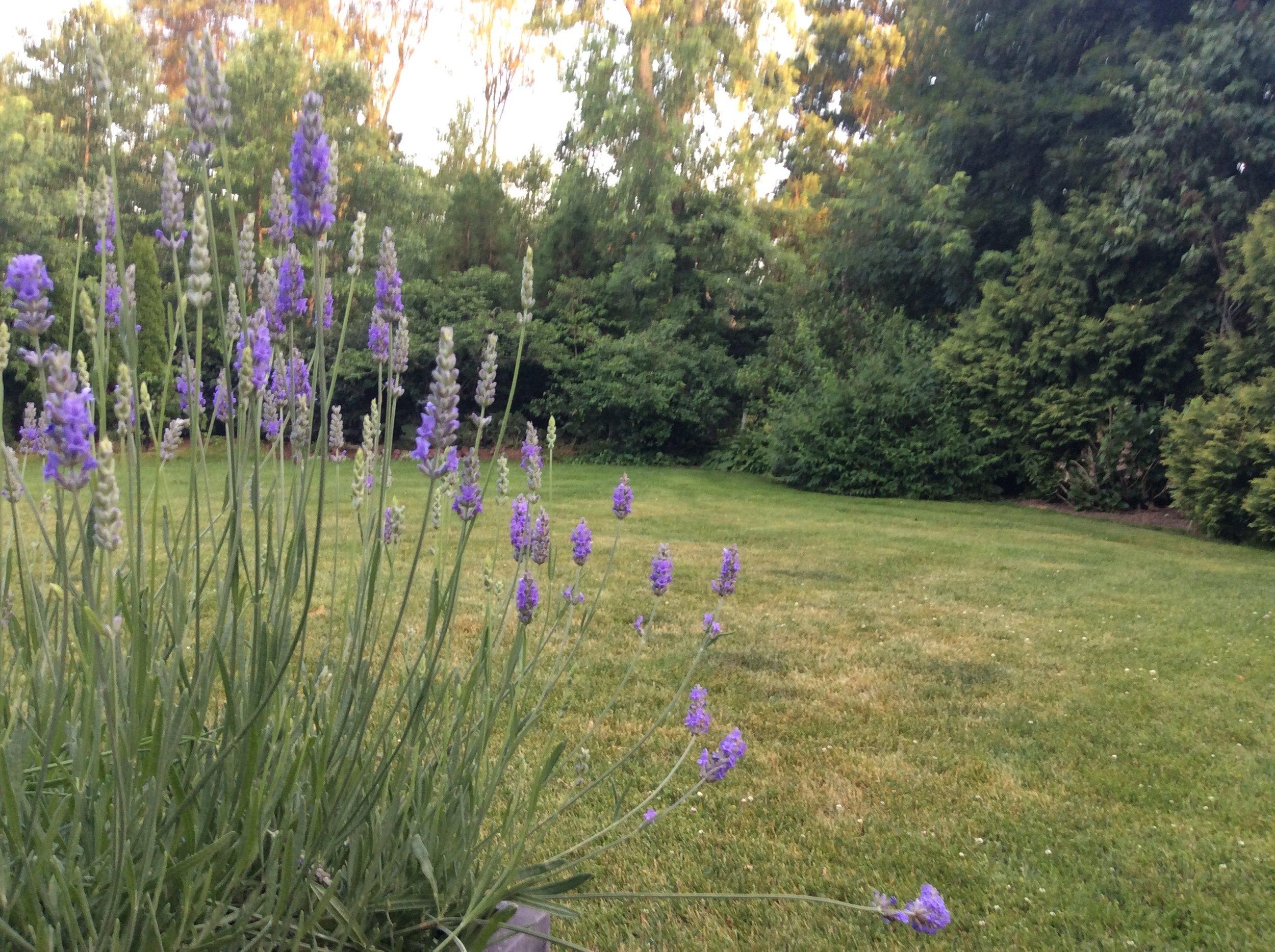 The Goddards' Yard