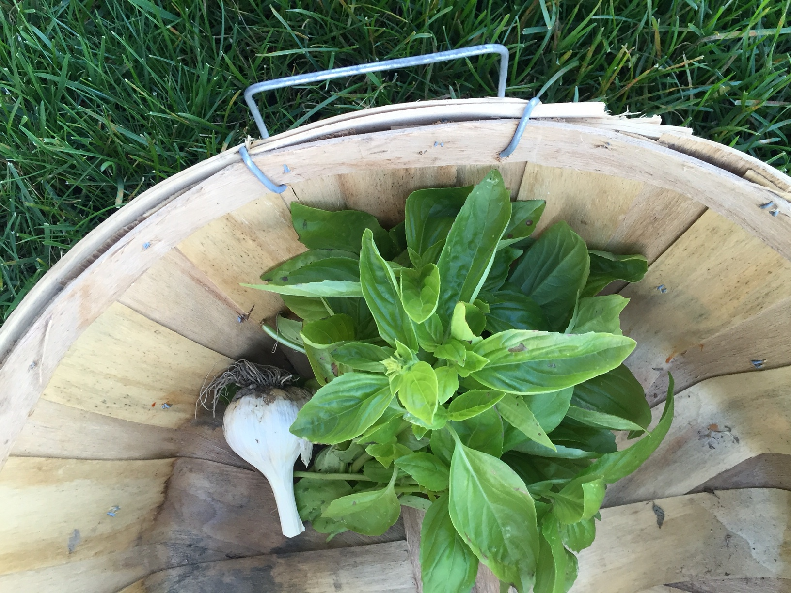 Basil from the Crowleys' Healthy Yard