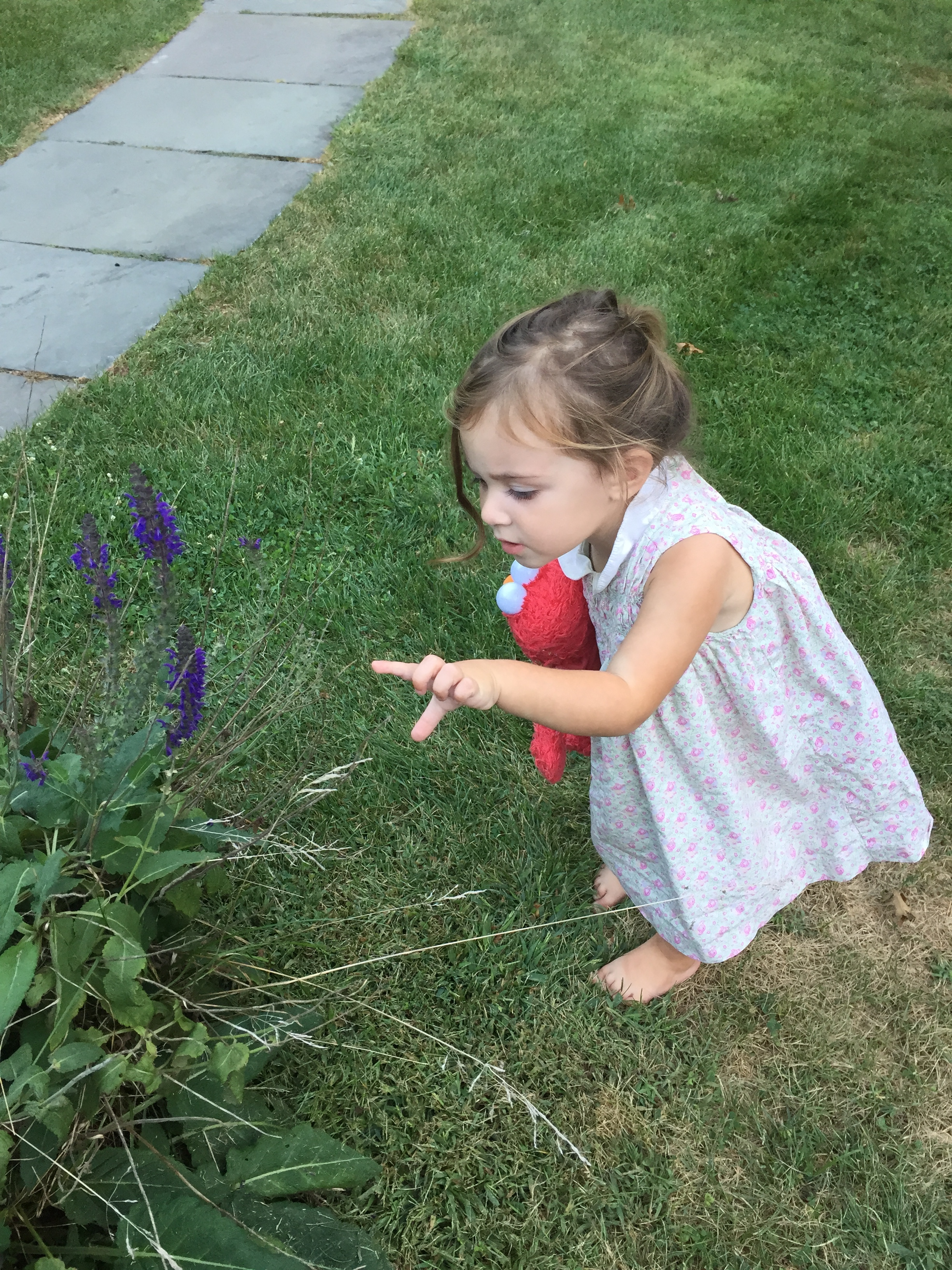 A natural lawn can be beautiful AND safe